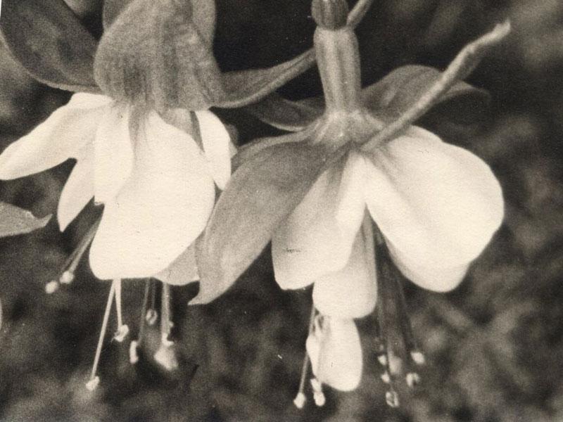 B&W Photo of flowers...