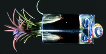 Prism 2003