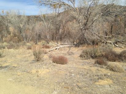 Dry in Rose Valley, Ojai