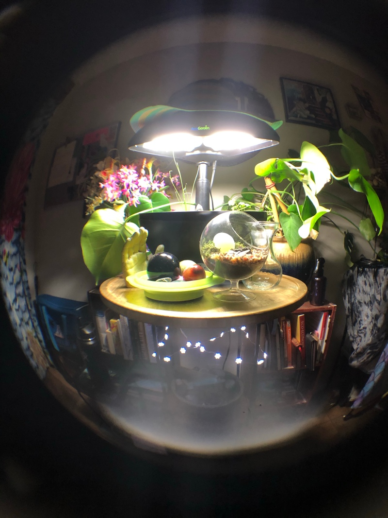 indoor garden fisheye photo